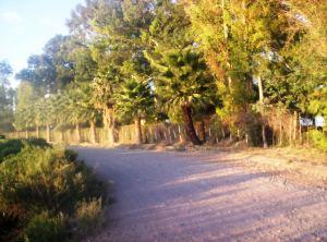 Camino rural Argentina