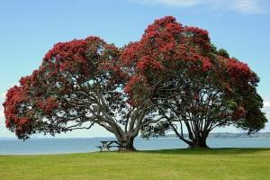 Pohutukawa Tree Christmas Tree