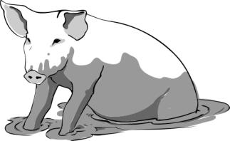 pig_in_mud